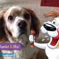 Got Our Pic Taken With Hamlet the Beggin'® Strips Dog! See How You Can Too!