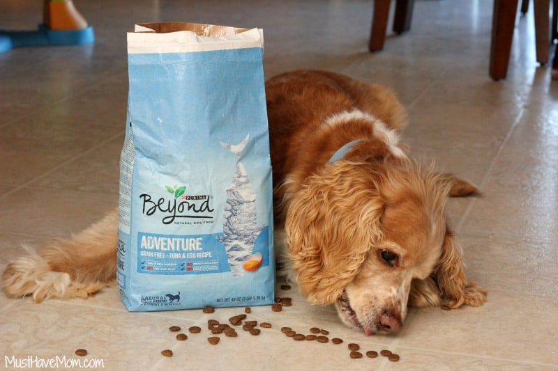 Purina Beyond Adventure Natural Dog Food