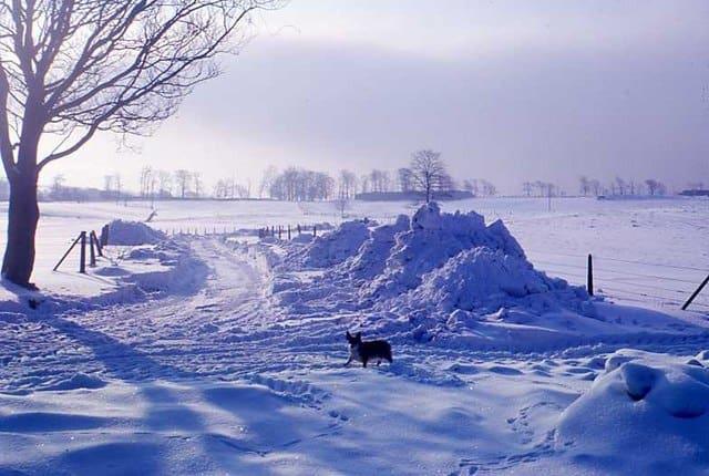 stranded in the snow