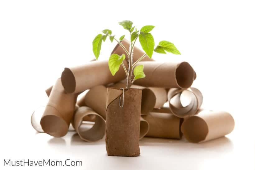 toilet paper tube planter