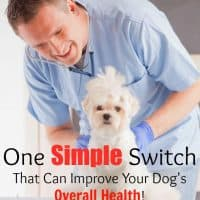 One Simple Switch That Can Improve Your Dog's Overall Health!