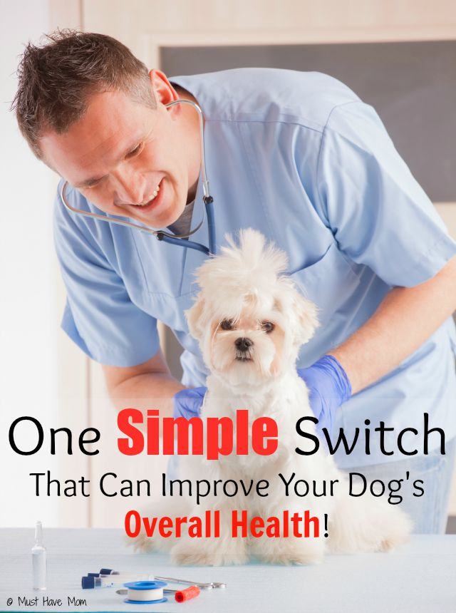 One Simple Switch That Can Improve Your Dog's Overall Health! This is so obvious and I never thought about it!