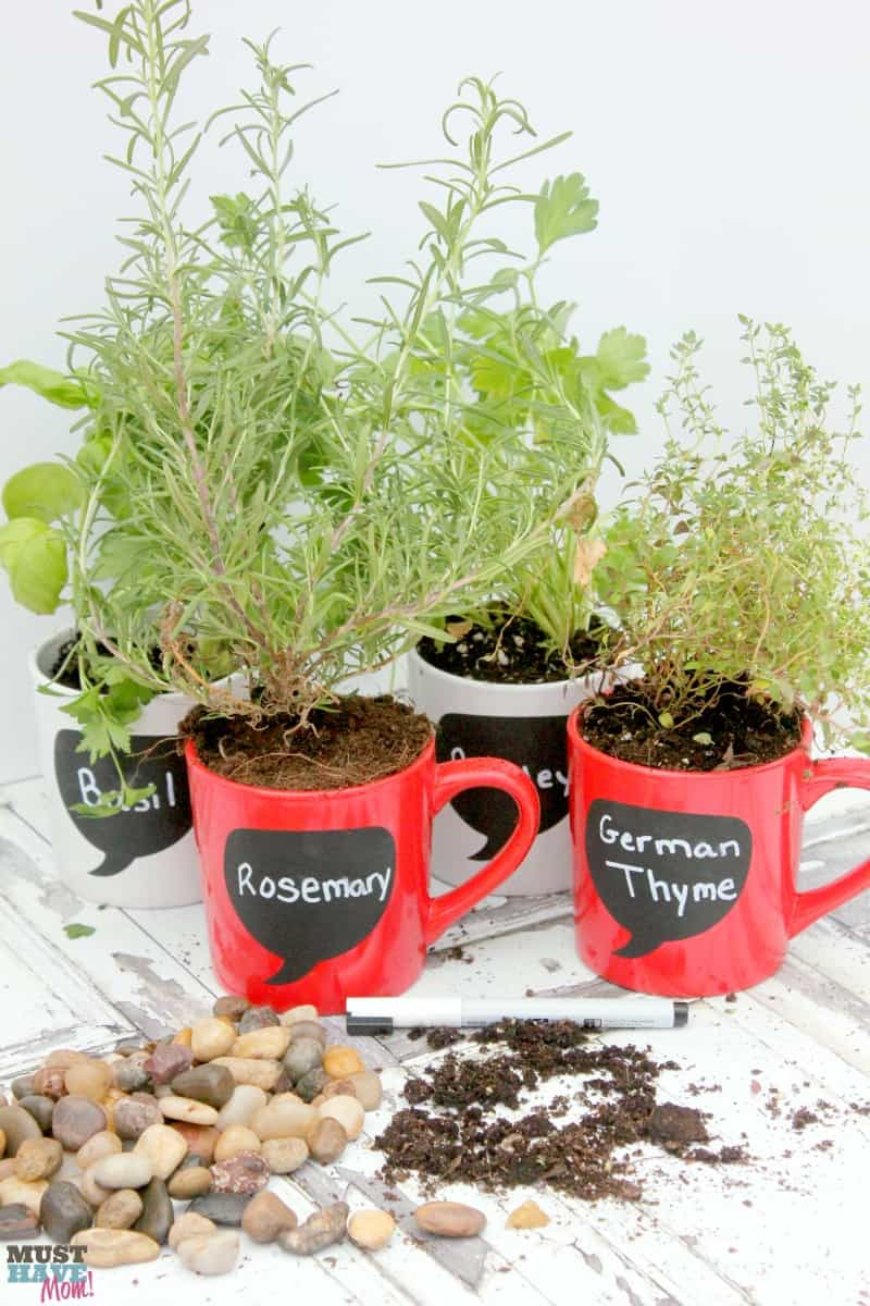 DIY Garden Ideas make your own coffee mug herb garden! This tutorial shows you what you need to do to have a windowsill herb garden on the cheap!