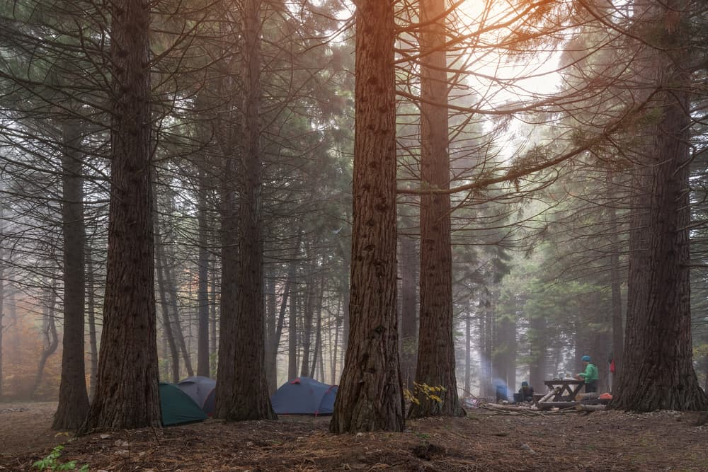 10 Essentials for a great family camping trip! Make sure you have these things before you go camping! Family camping is a great bonding activity!