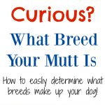 How To Determine What Breeds Your Dog Is Made Up Of!
