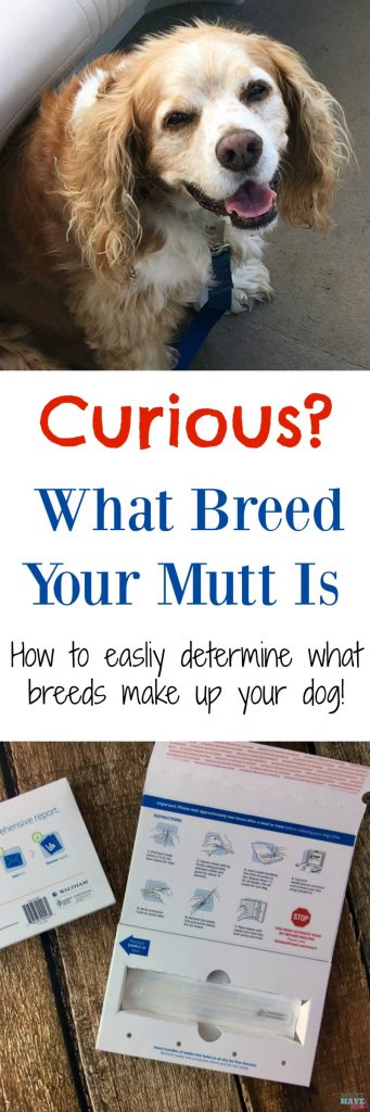 Curious what breeds make up your mutt? Here's an easy way to determine what breeds your dog is made up of! We did it and check out our results!