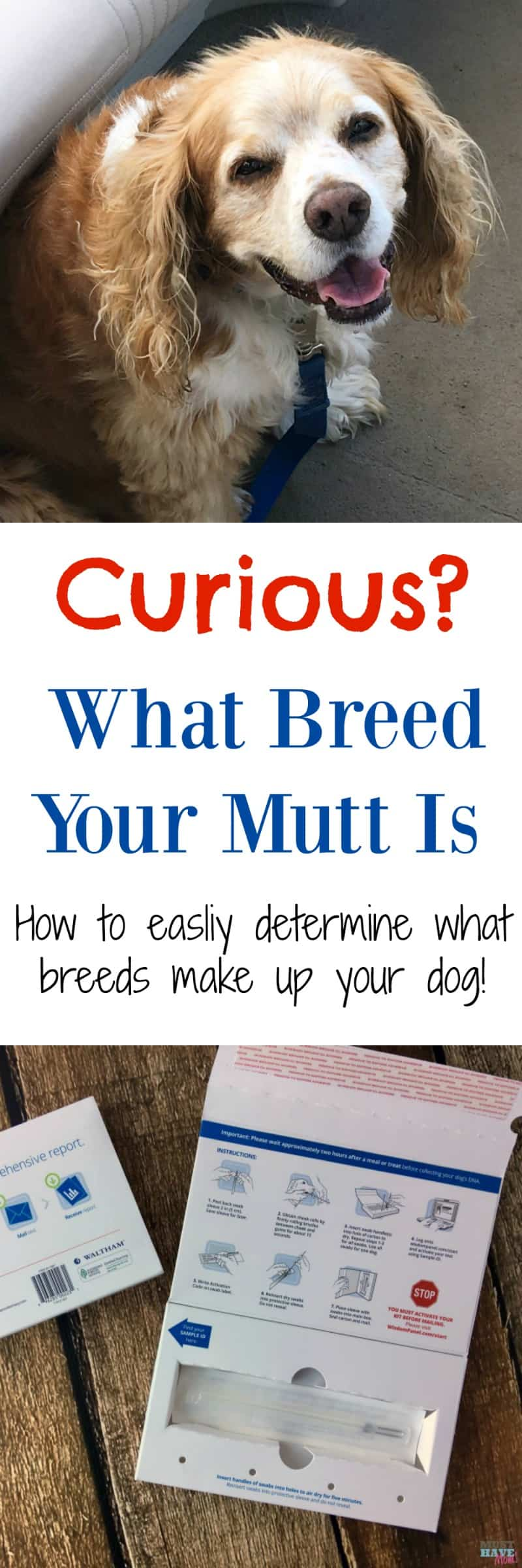 How To Determine What Breeds Your Dog Is Made Up Of! - Must Have Mom
