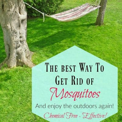 Best Way to Get Rid of Mosquitoes