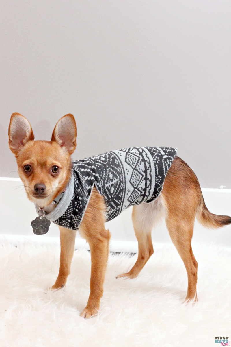 Easy, 3 step dog sweater DIY! No sew DIY dog sweater made from a sweatshirt or sweater! 3 easy steps!