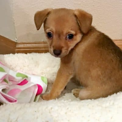 Ultimate Guide To Bringing Home Your New Puppy!