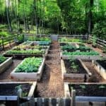 Fund A Community Garden with Seeds of Change Grant Program