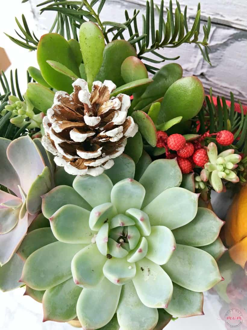 Christmas Succulent Gift Ideas.Christmas Succulent Arrangement Must Have Mom