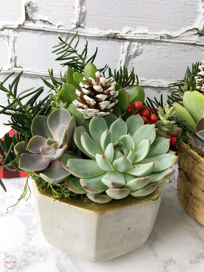 Sangria and succulent garden gift basket ideas for women! Great hostess gift for the holidays.