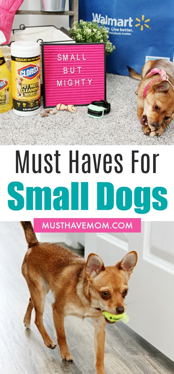 Must Have Essentials for Small Dogs