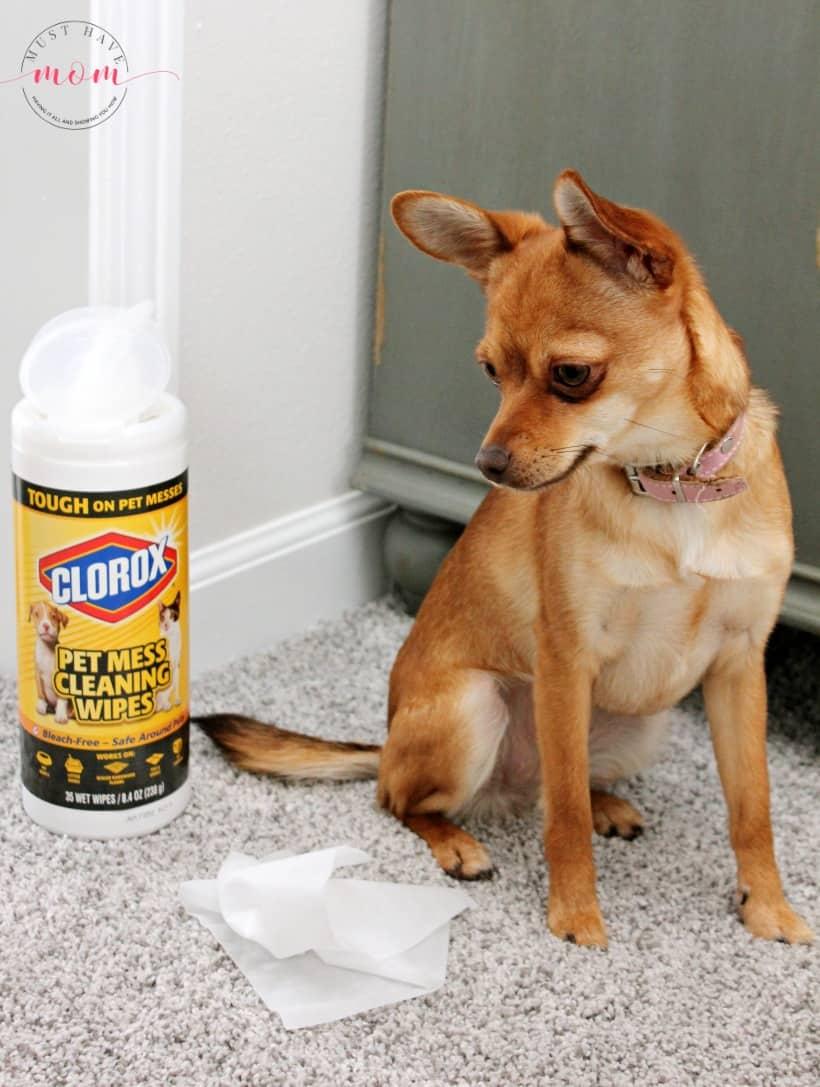 Clorox pet mess wipes