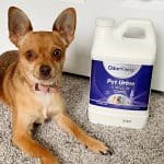 Best Pet Urine Remover: How to get Rid of Pee Smell From Carpet!