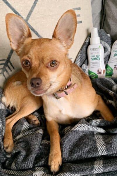 espree dog toothpaste