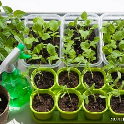 Family Vegetable Garden. Start a Family Taco Garden