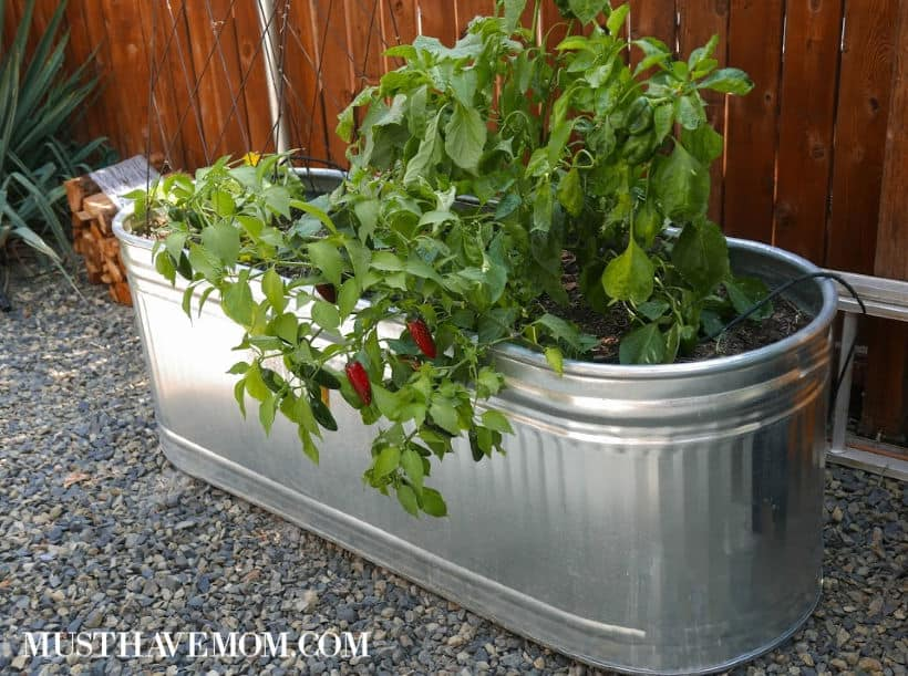 potted garden outdoors