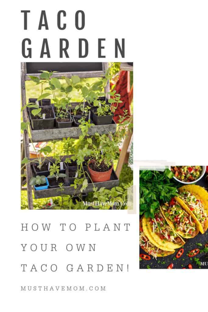 how to plant your own taco garden
