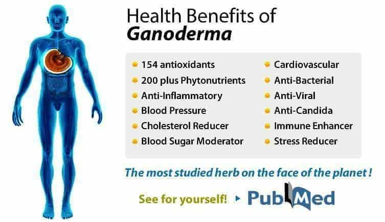 ganoderma benefits
