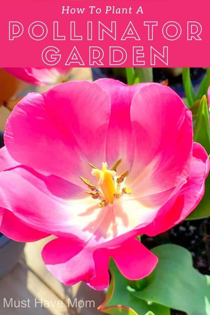 pollinator garden info